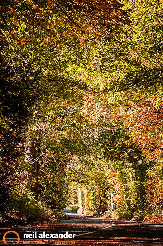 Leafy Autumn road scene in the Peak District