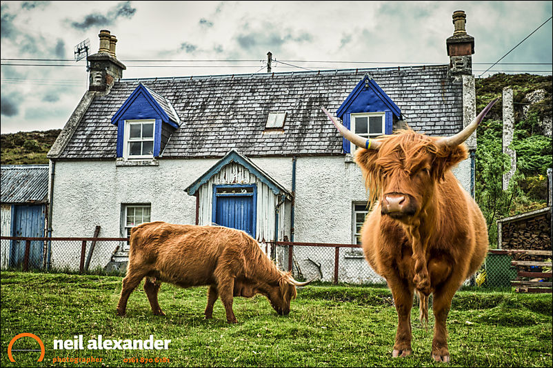 The little hamlet of Duirnish in the Highlands of Scotland, where Highland cattle freely wander the streets