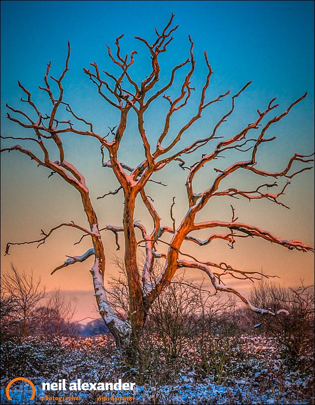 Leafless snow covered tree in the Peak District