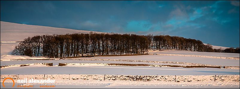 Small copse in the Peak District surrounded by snow covered fields