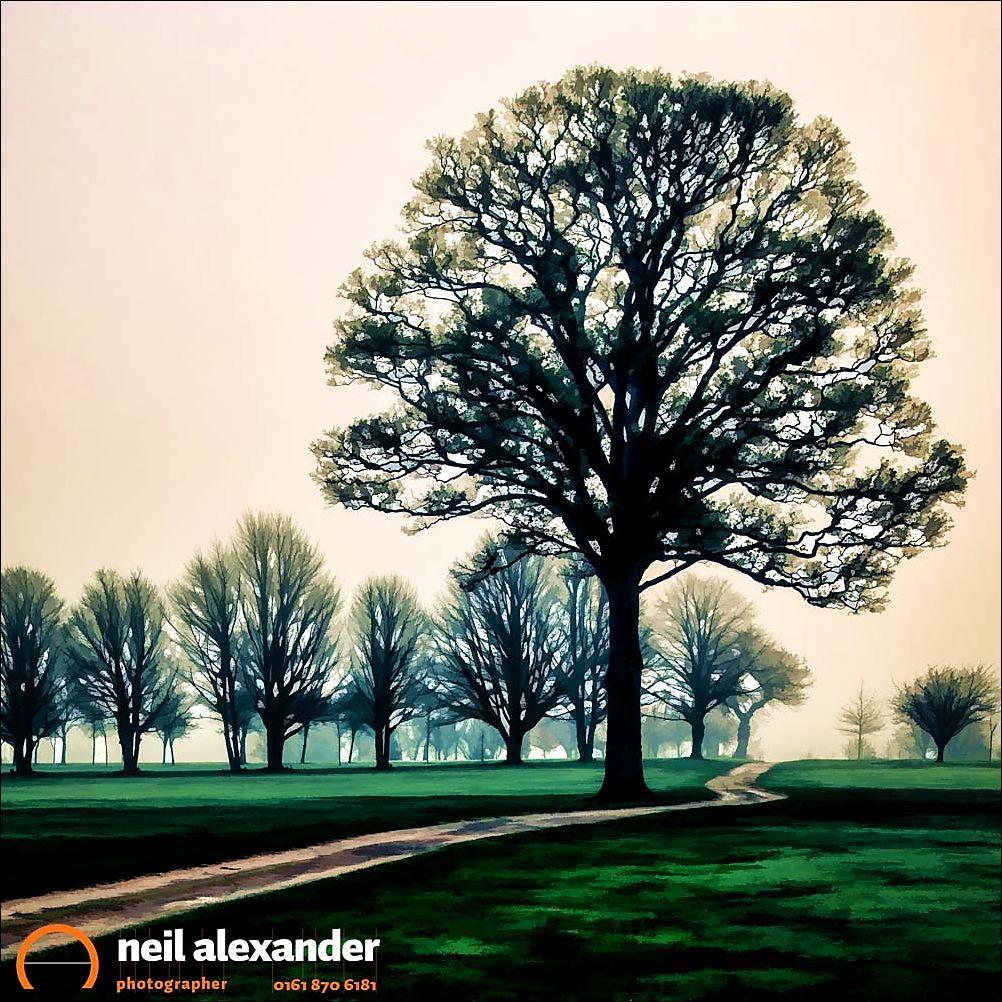Tree at dawn on golf course, Hale Golf Course, Altrincham, Chesh