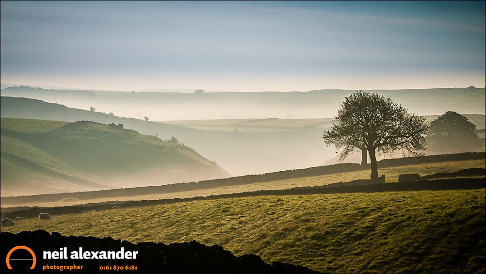 Trees in the mist in the Derbyshire Dales at dawn