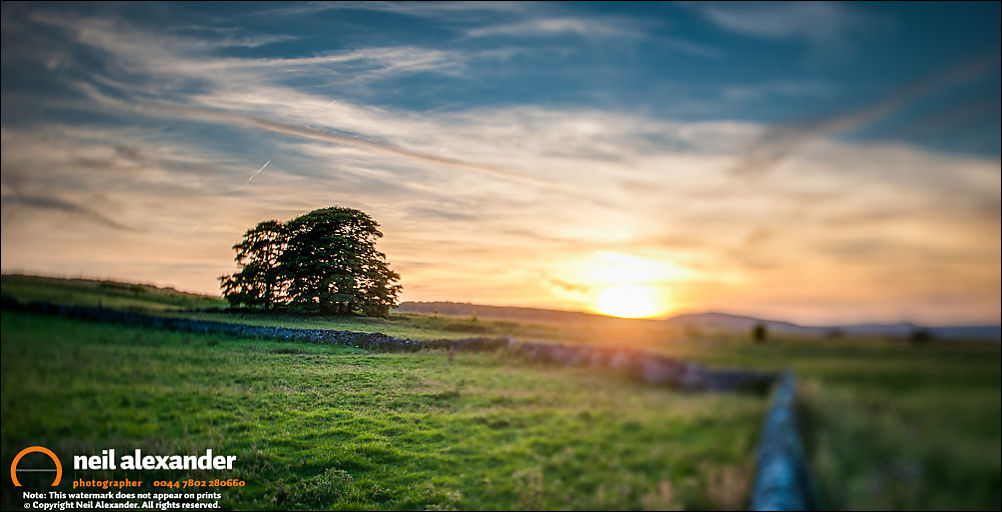Lonely tree at sunset, near Bakewell, Peak District. Photographed with 24mm TS Lens. Bracketed exposure processed in Lightroom and LR Enfuse.