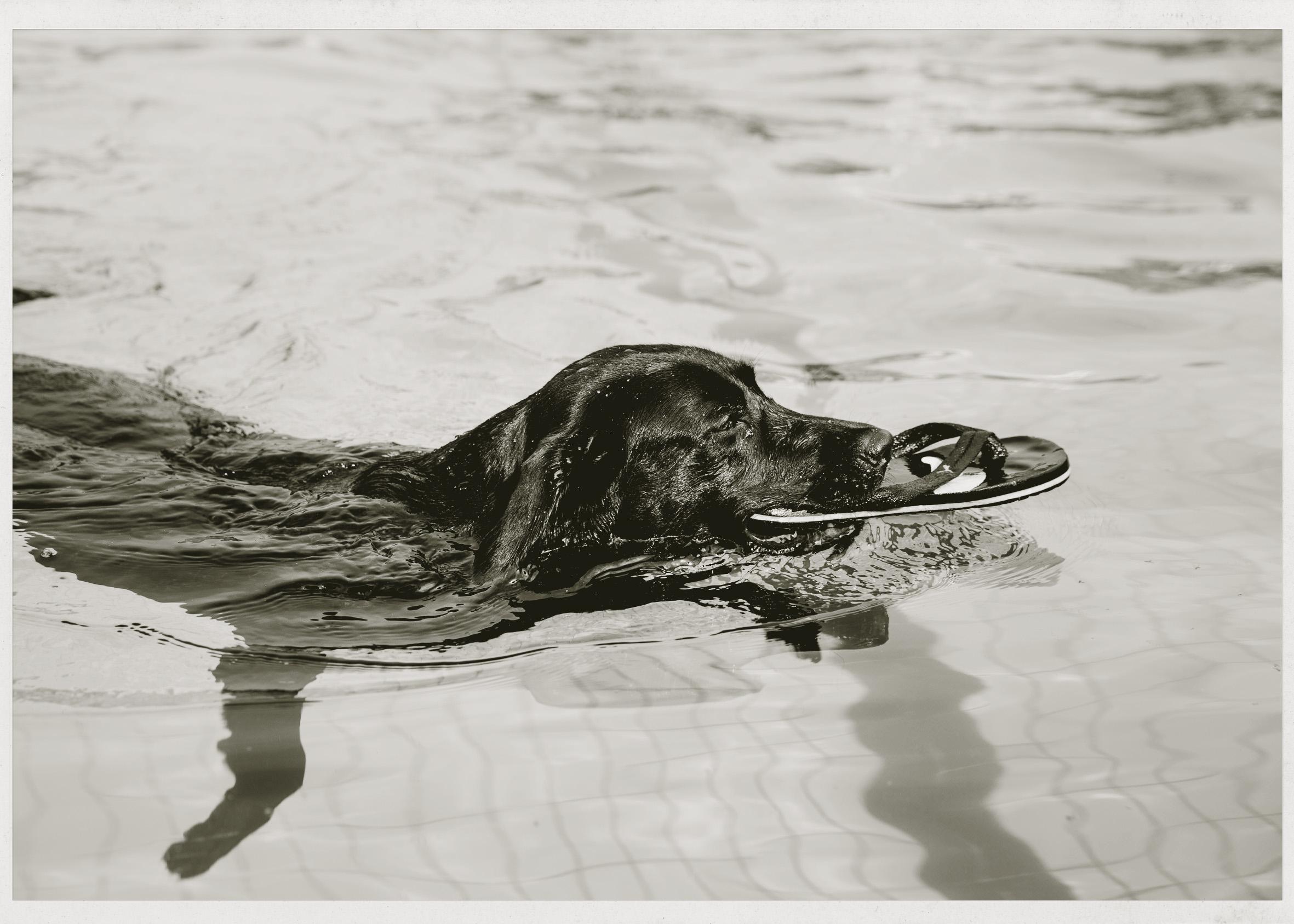 Hundeschwimmen_315.jpg