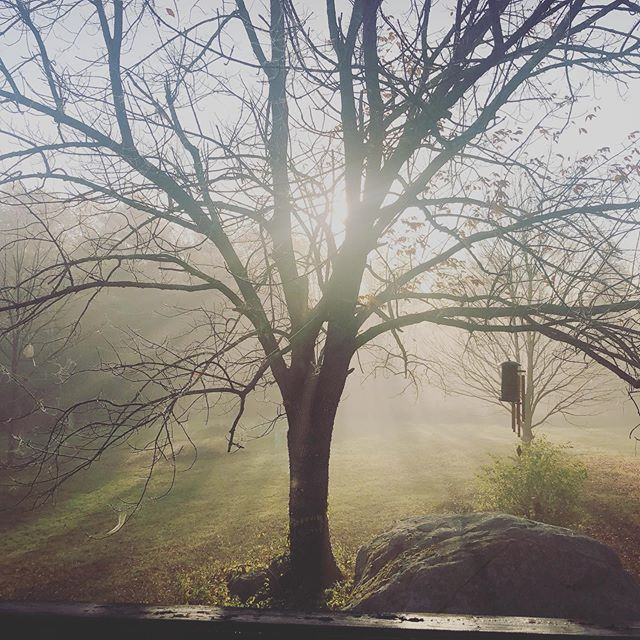 The light was lovely this morning. But dang we got a lot of 🕷 in our trees! Upside is free Halloween decorations.