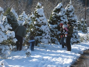 Family Finding Their Tree