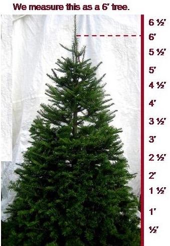Measured Tree.jpg
