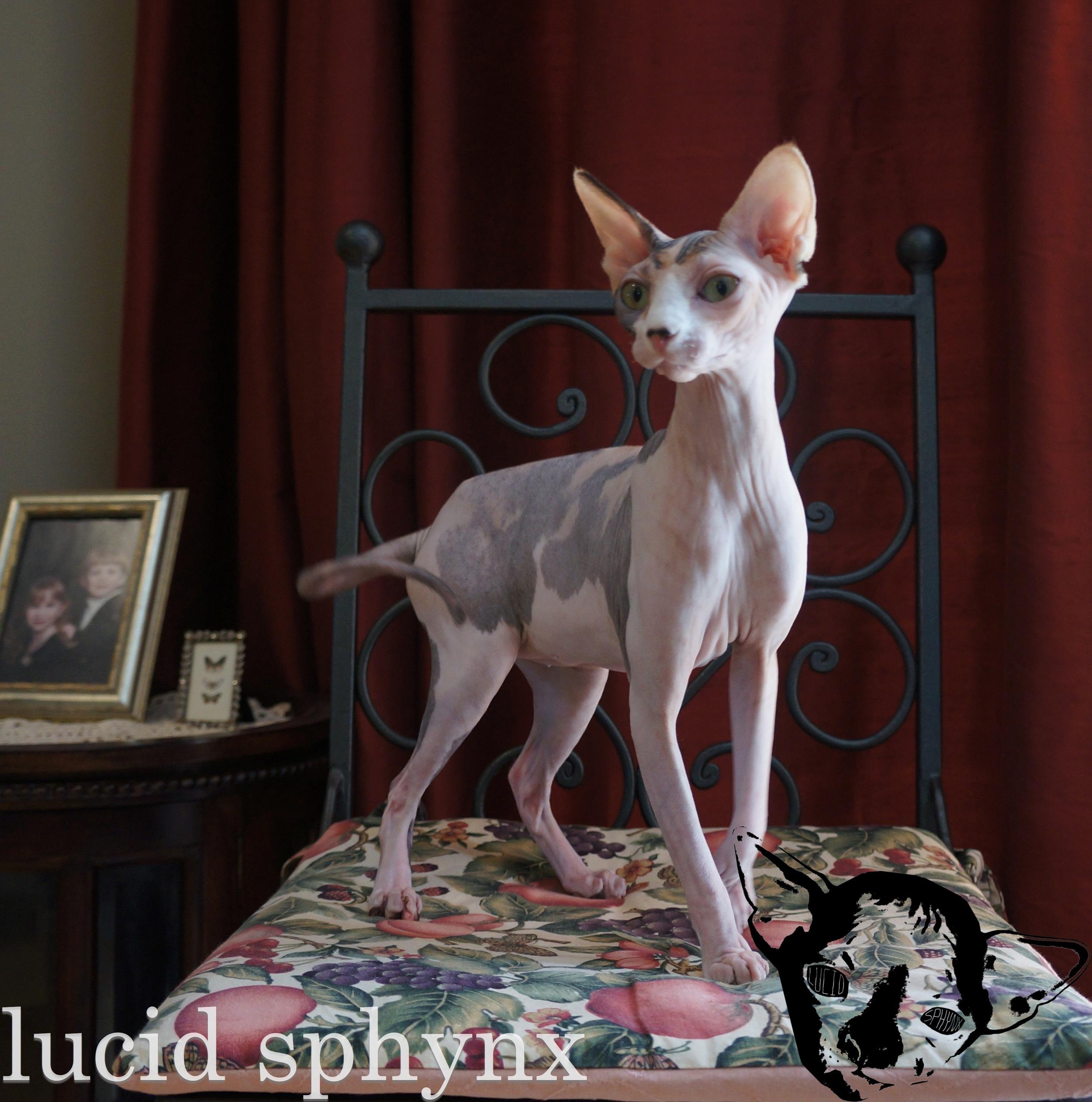 Gypsy Rose Leigh- Retired (Virginia)