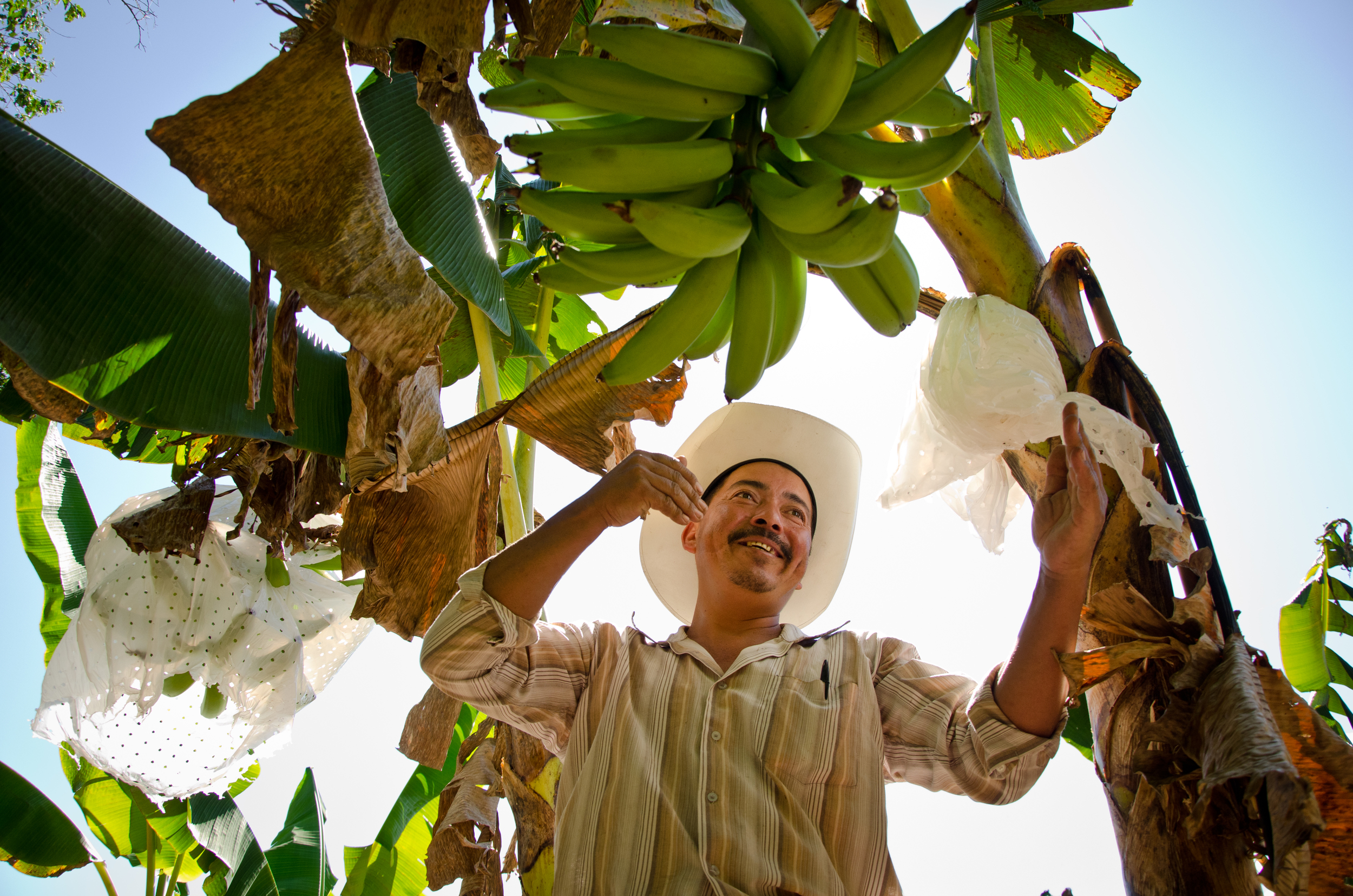 Lelis Edgardo Cantarero Palacios, 40, tends to the last plantains of the harvest season on his farm in central Honduras. An NGO helped him get started, and in turn he must give plantain seedlings to other farmers to help them start their own farms too.
