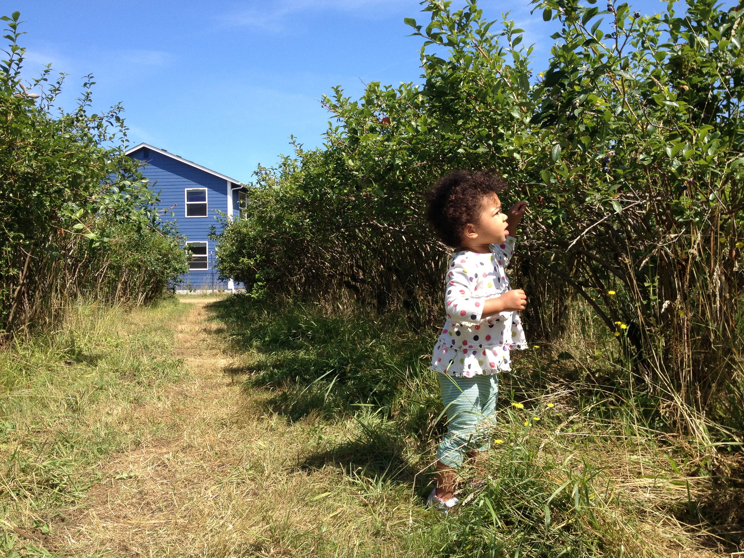 Picking blueberries with my little friend Charlotte, and her mama & baby sister.