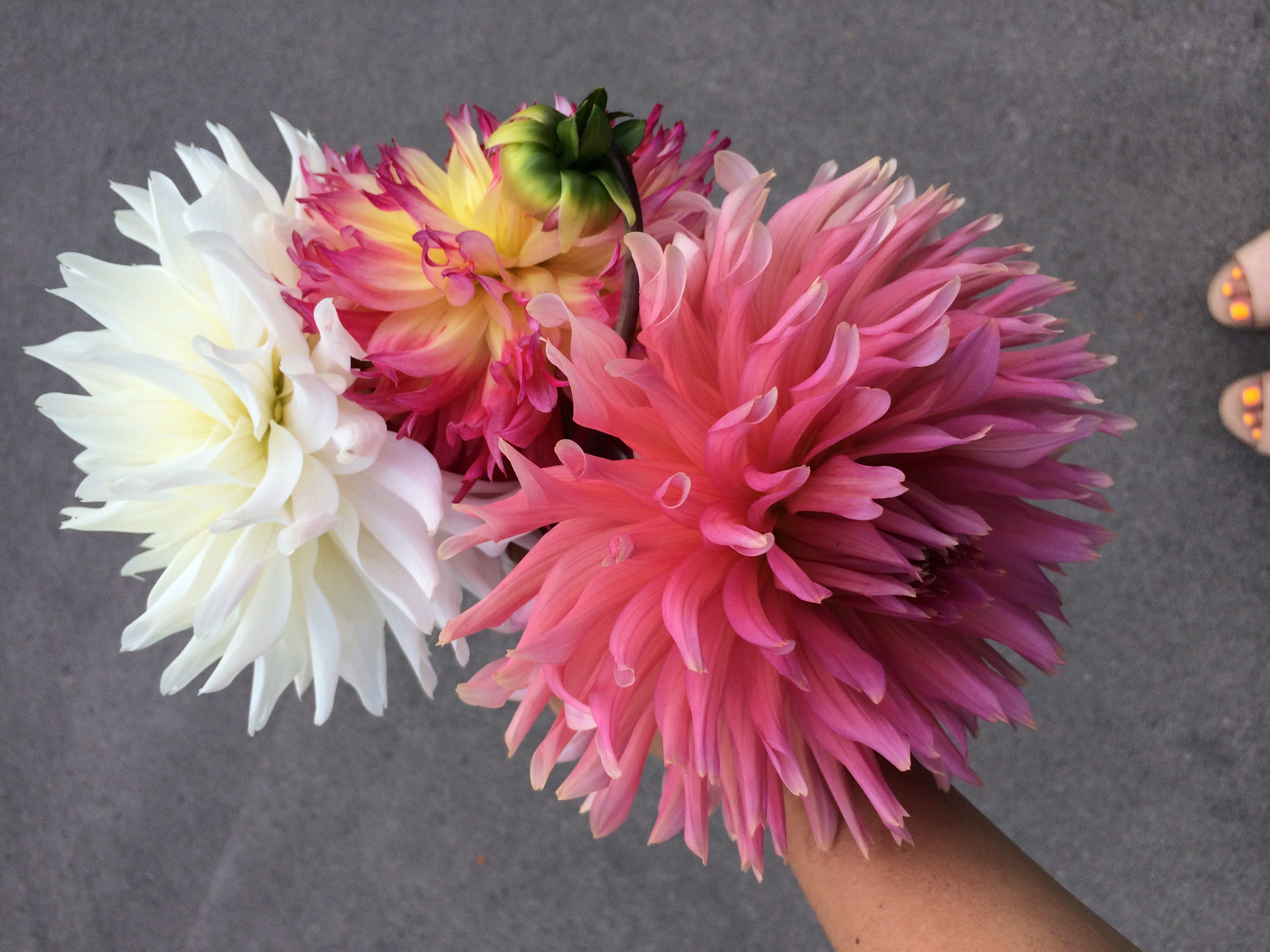 The prettiest dahlias at Tim + Hannah's wedding last weekend.