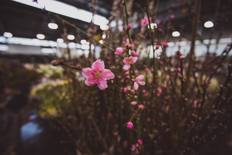 Flower Markets _ LR-12.jpg