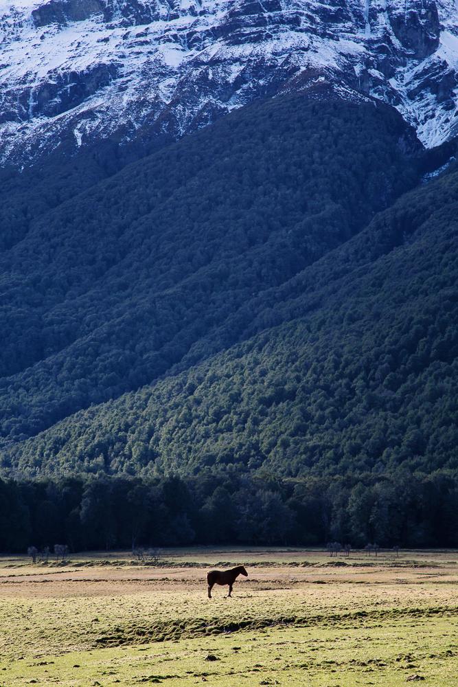 NZ LR-61.jpg