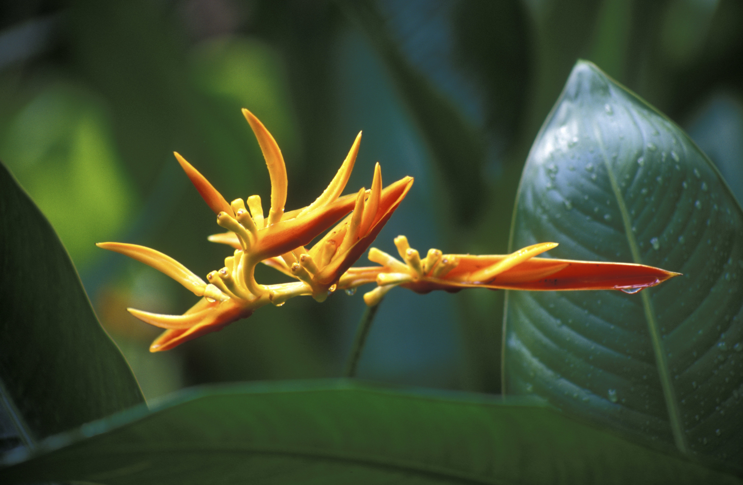 Botanical Gardens-2003