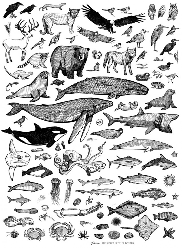 Species Poster Pina