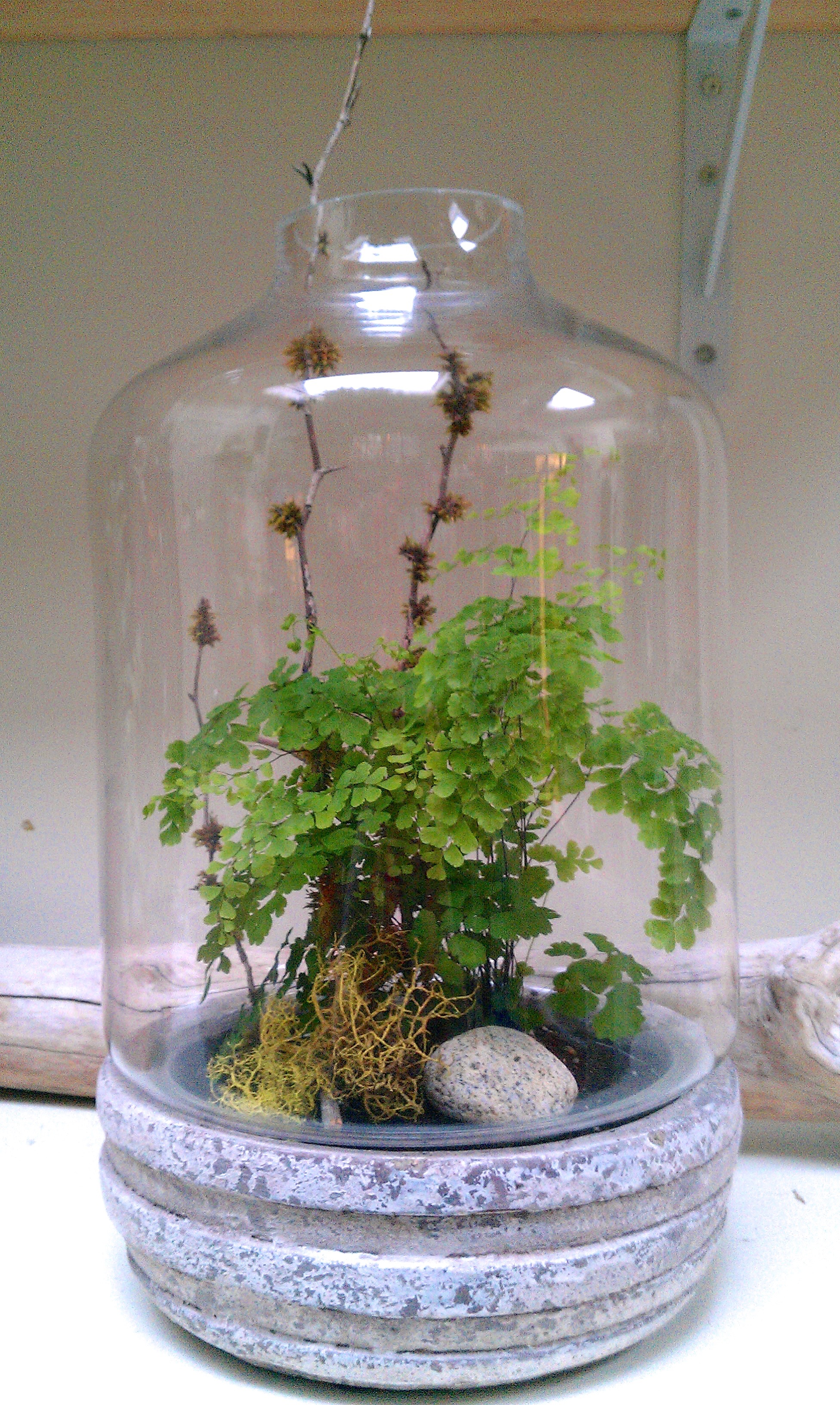 large glass and stone terrarium.jpg