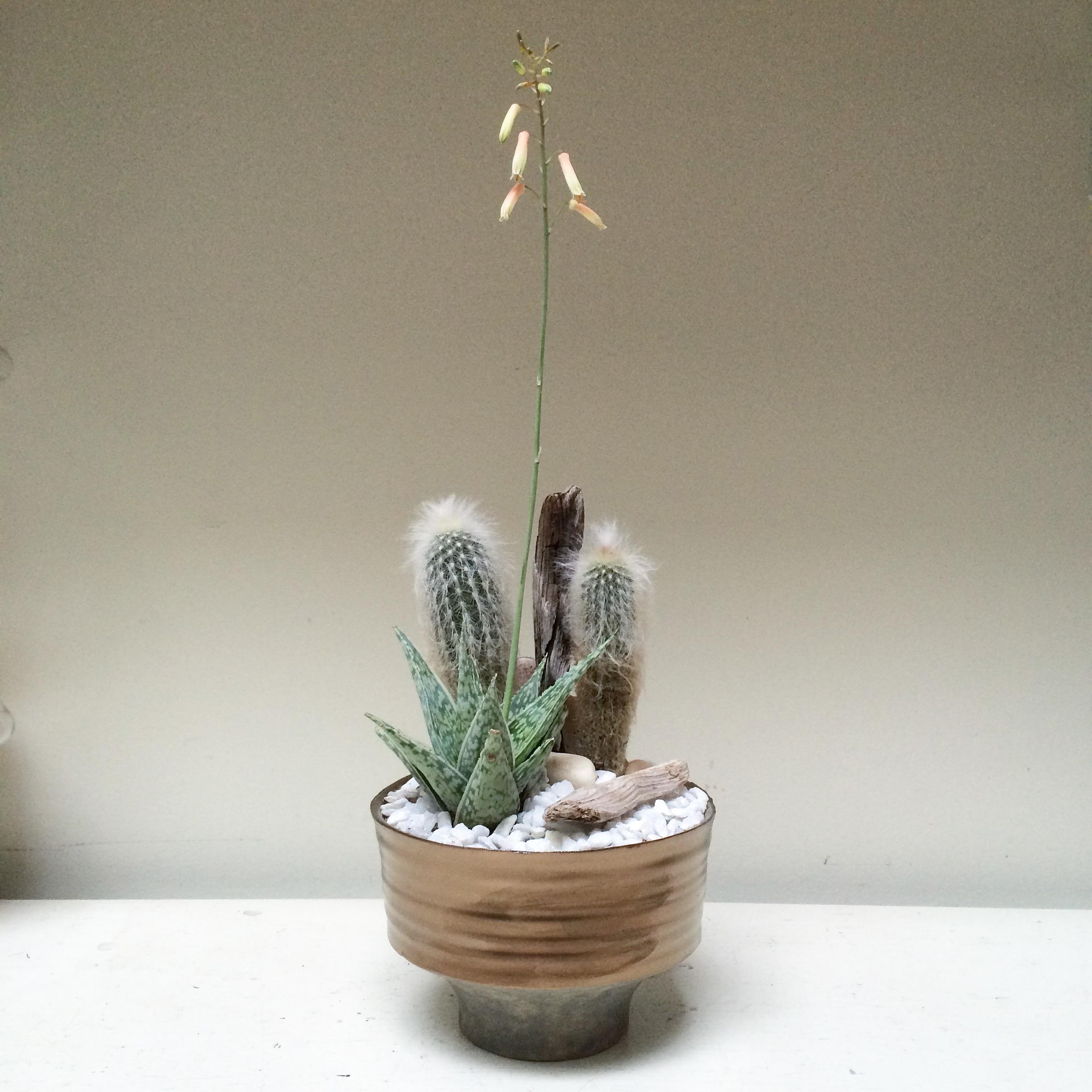 bronze cacti bowl.jpg