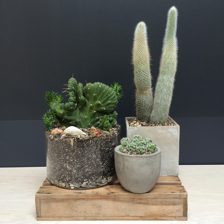 large cacti planters.jpg