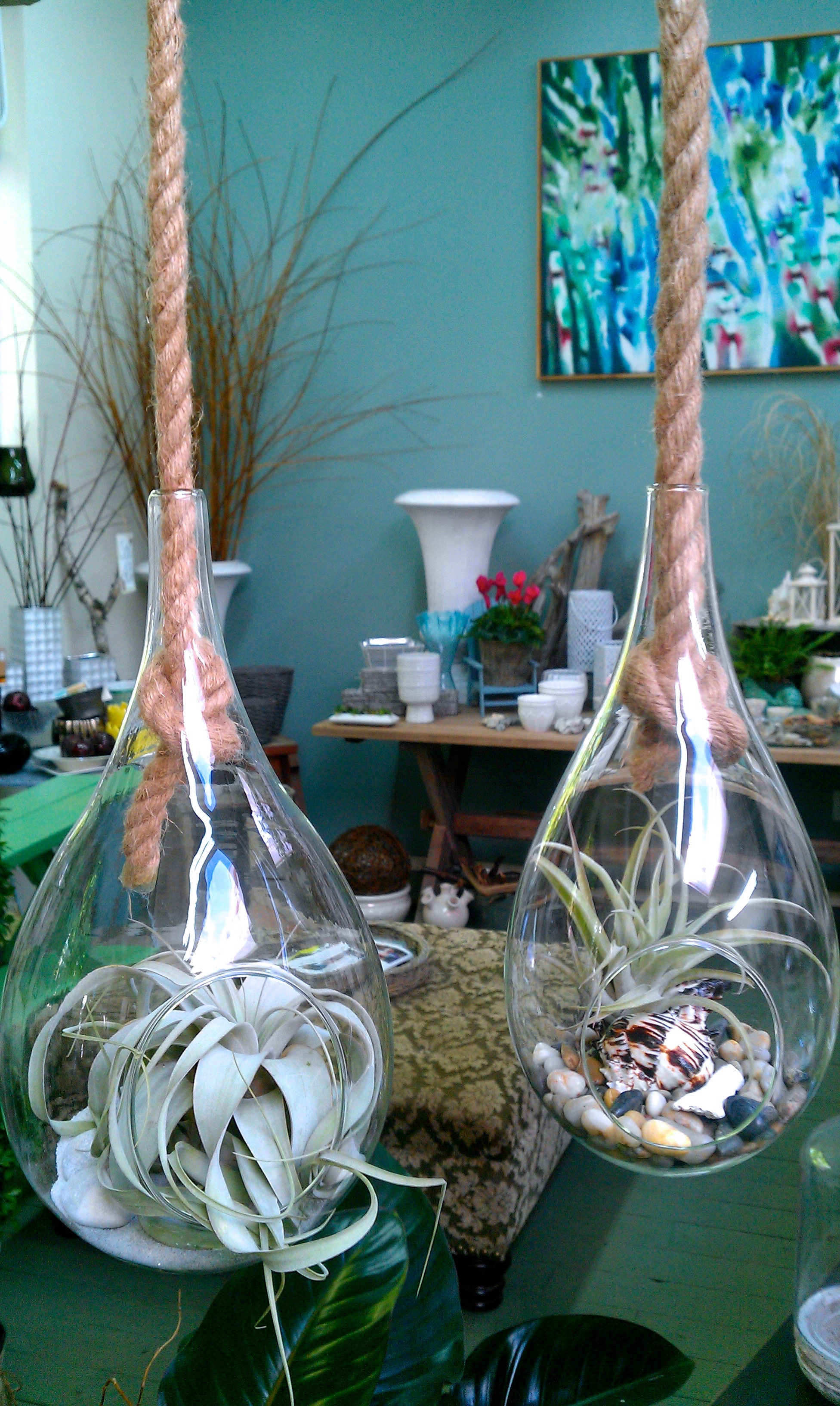 large teardrop and rope airplant terrarium.jpg