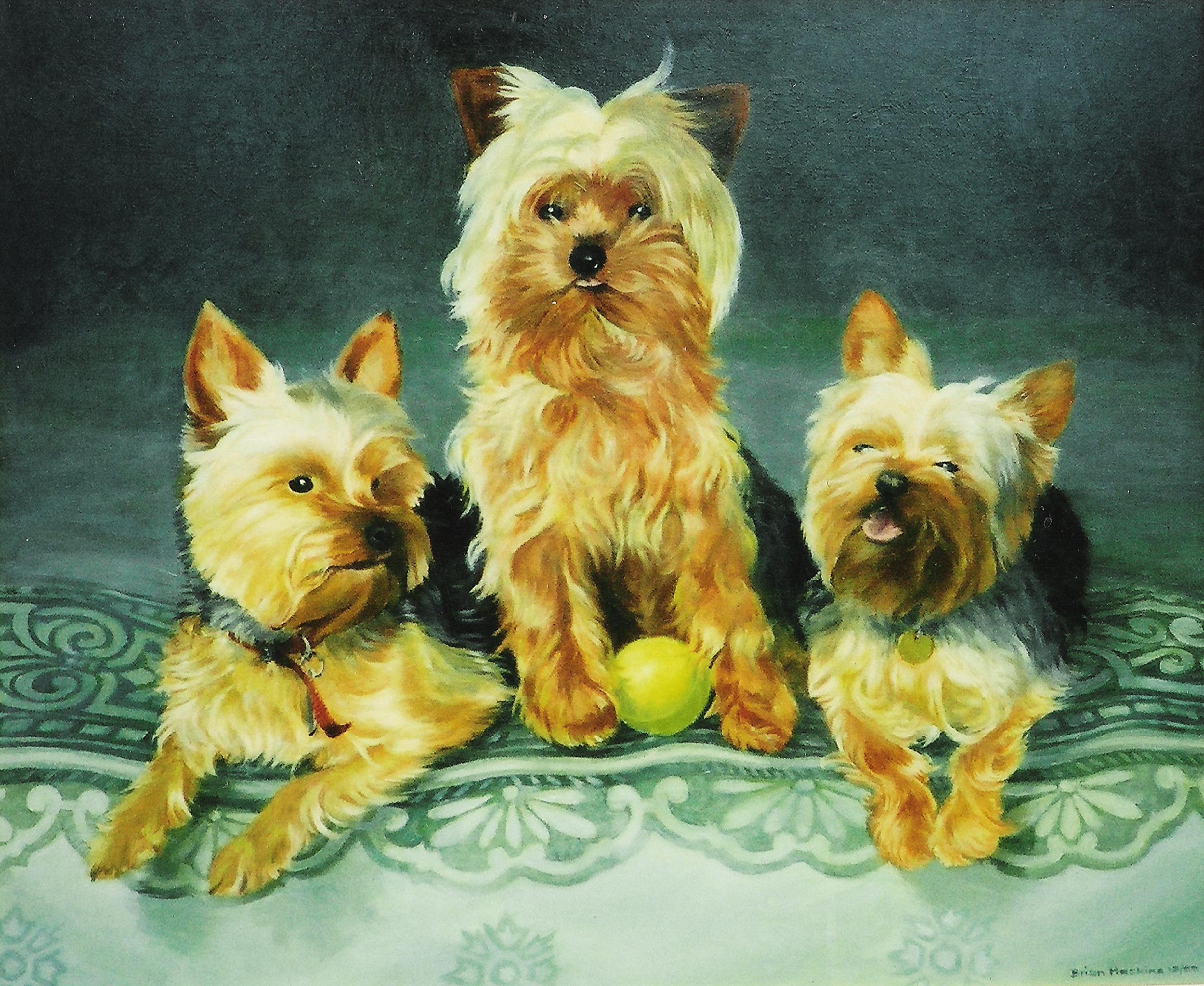 Yorkie Dogs3.jpg