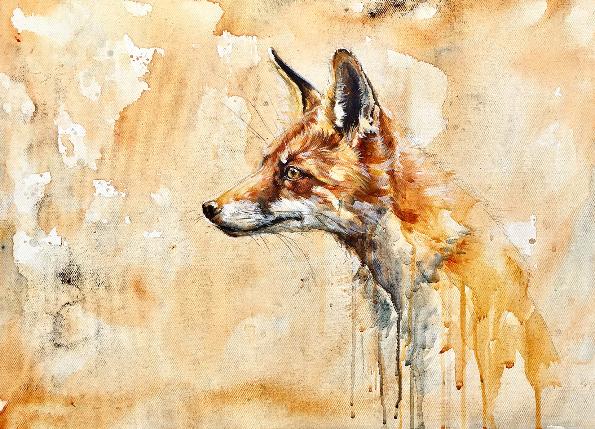 drippy-fox-jerome.jpg