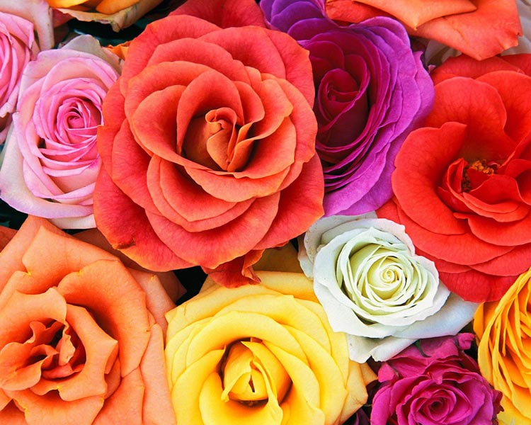 Roses_Bunch_Of_Flowers.jpeg