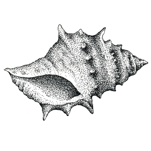 Illustration by Hugh Cowling