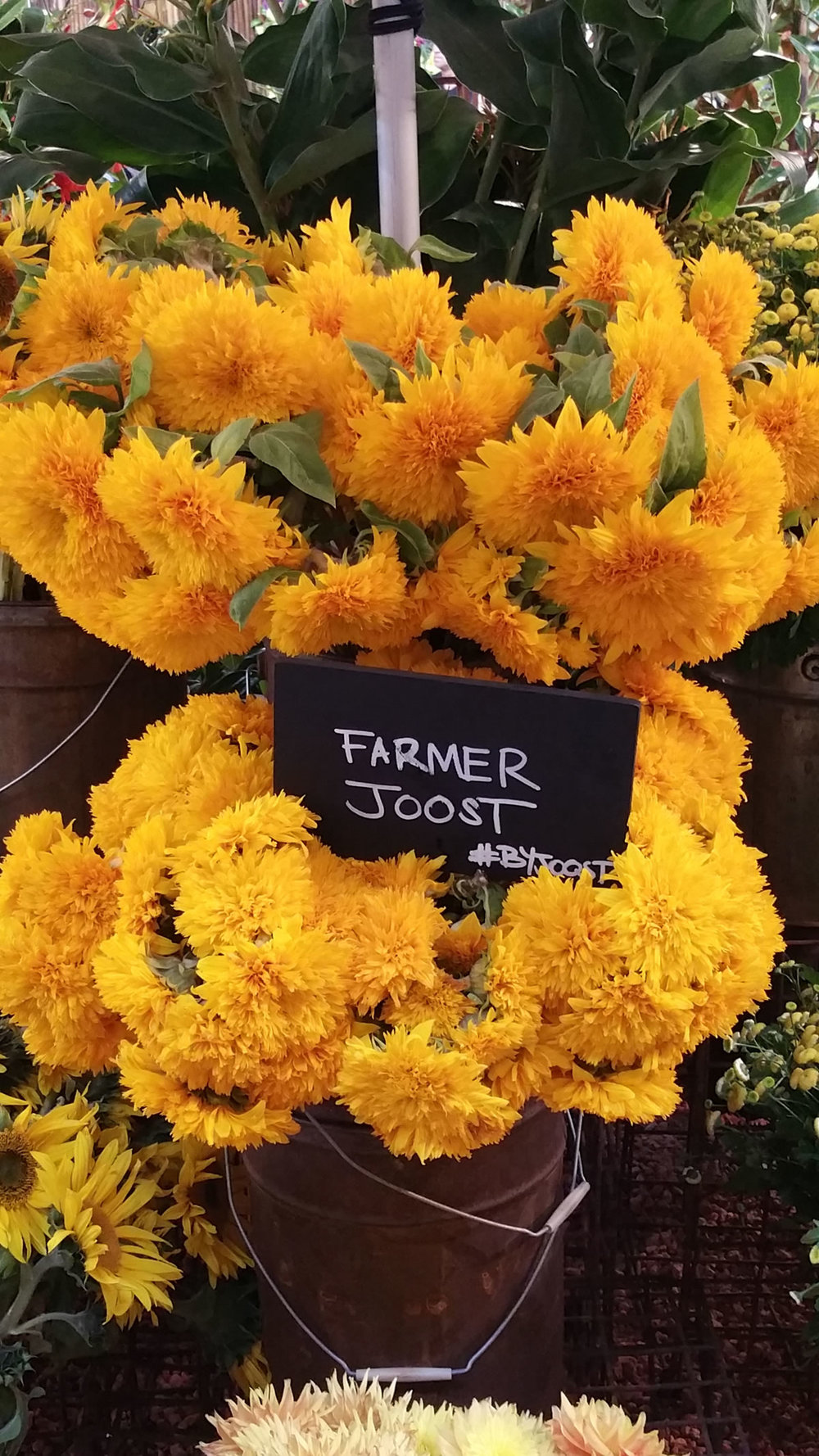 Another of my Local Heroes: Joost...the man's imagination, common sense and optimism for the future is boundless. Growing fabulous flowers is just one of the many parts of this modern day Renaissance Man...If you haven't heard of him, do look him up!
