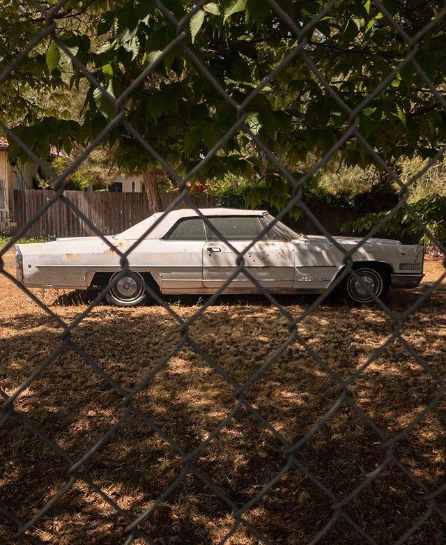 Backyard gems you find in #sonomacounty