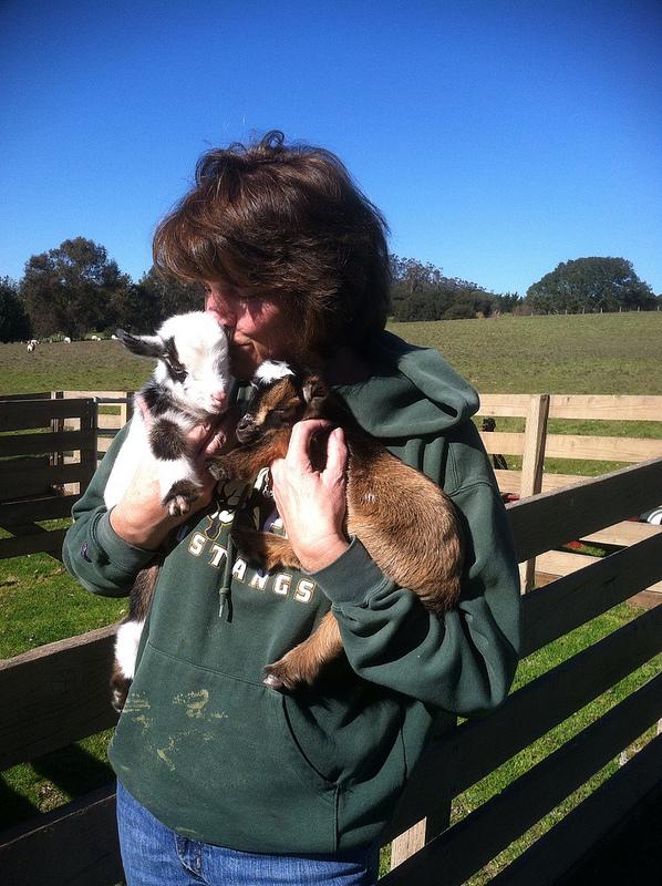 Mom kissing baby goat