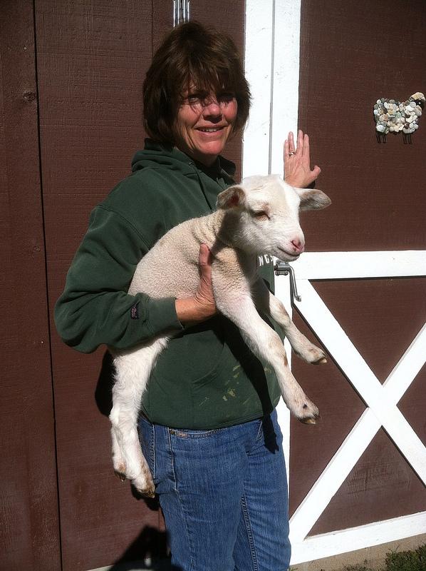 Mom holding baby lamb