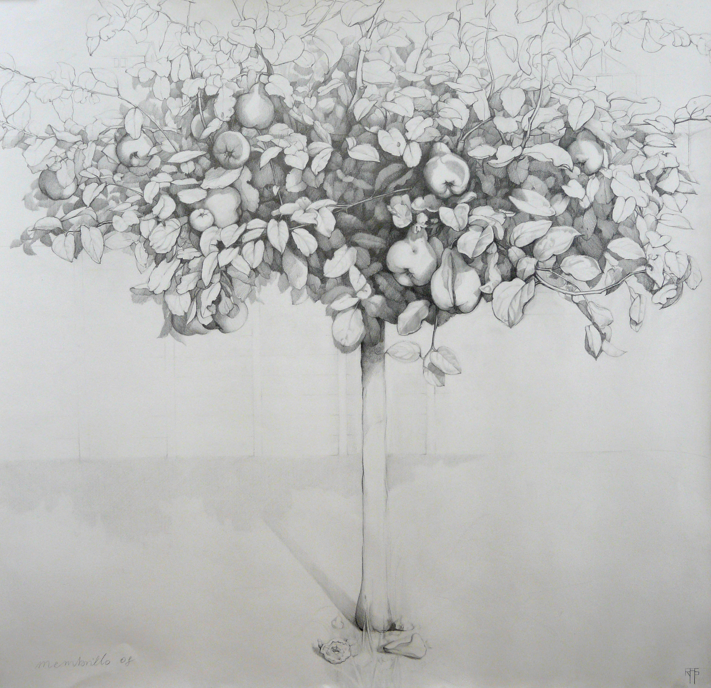 Membrillo III. Graphite on paper. 106x110cm. Private collection