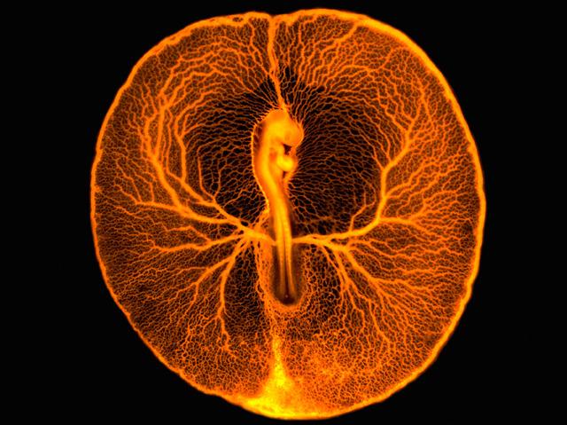 The Golden Egg, Photo credit Vincent Pasque, University of Cambridge