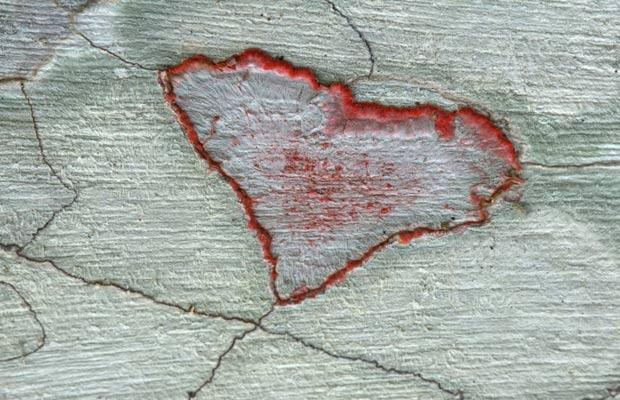 Heart-shaped Lichens (Crustose), Audubon Corkscrew Swamp Sanctuary  