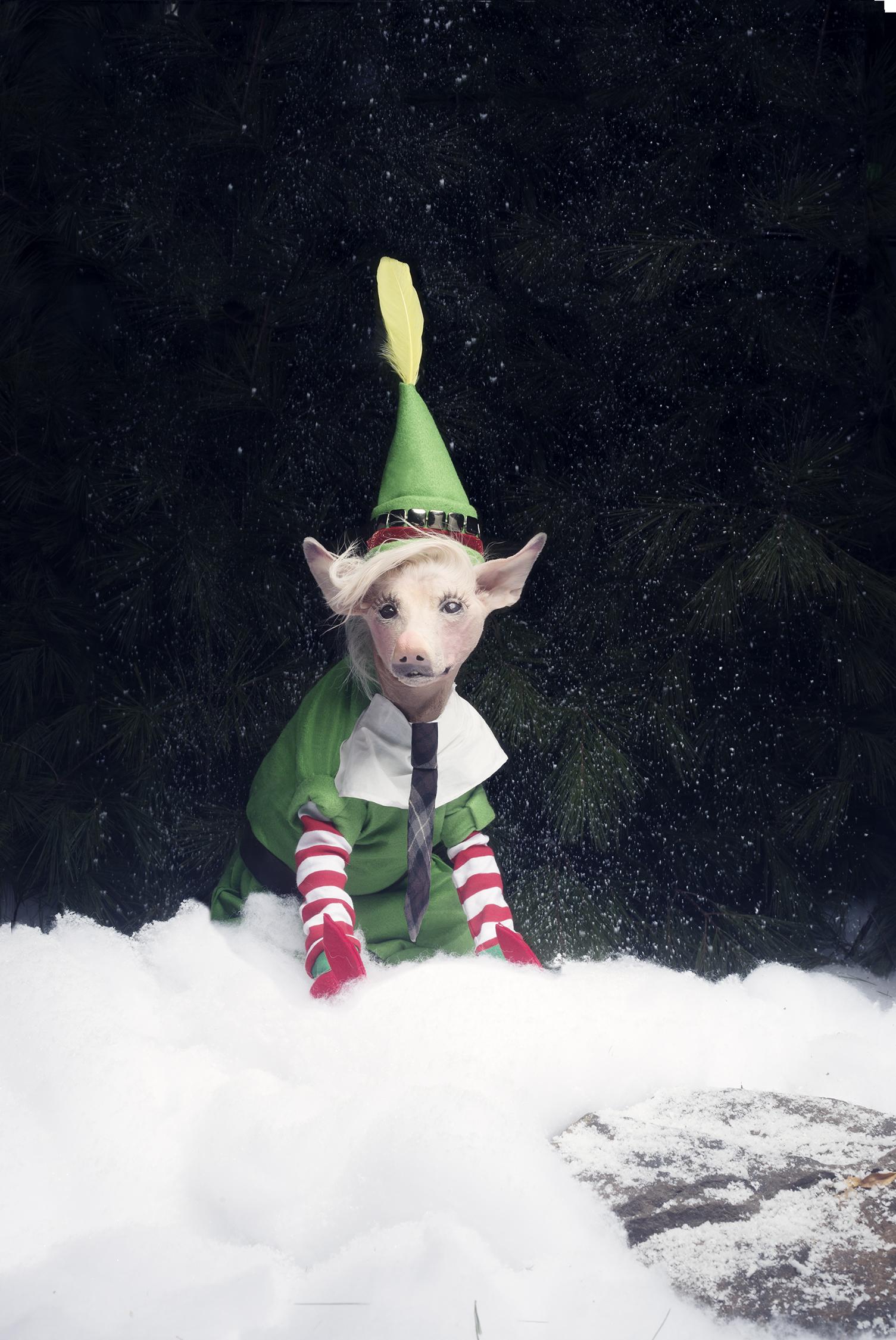 mico-elf-december-2013-48.jpg