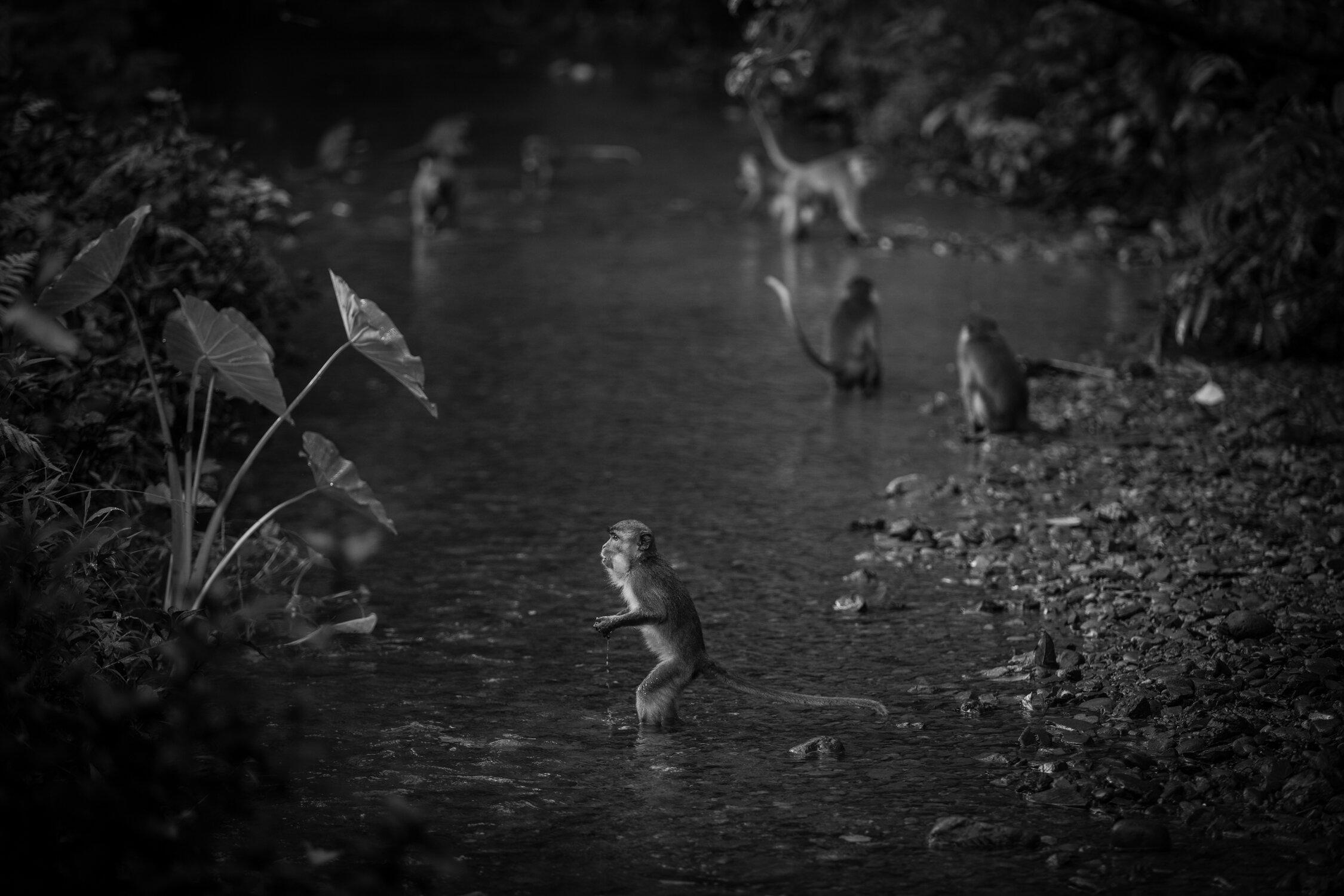 bukit-lawan-aug10-11-2017-551.jpg