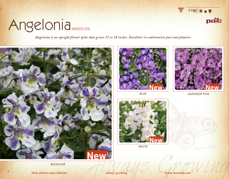 Micandy page B Catalog.jpg