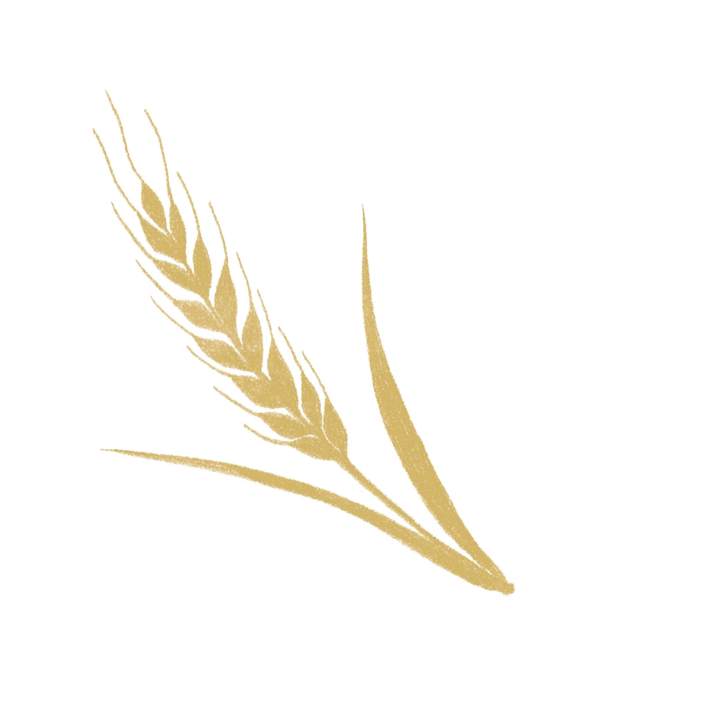 麦穗.jpg