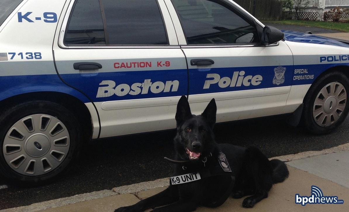 Pictured: Boston Police K-9 Duke