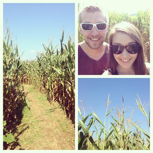 Beautiful day for a corn maze!! 🌽🍁🍂 #cornmaze #laymansfarm #autumn #autumntradition