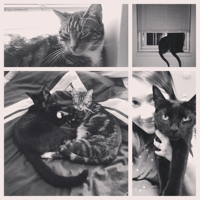 These perfect fur babies have had one hell of a year with their mother uprooting them to PA, only to make them back home after 3 months! They're the bestest love bugs ever! #furbabies #brotherlylove #cuddlepuddle #nationalcatappreciationday #nationalcatday #theyhavestolenmyheart