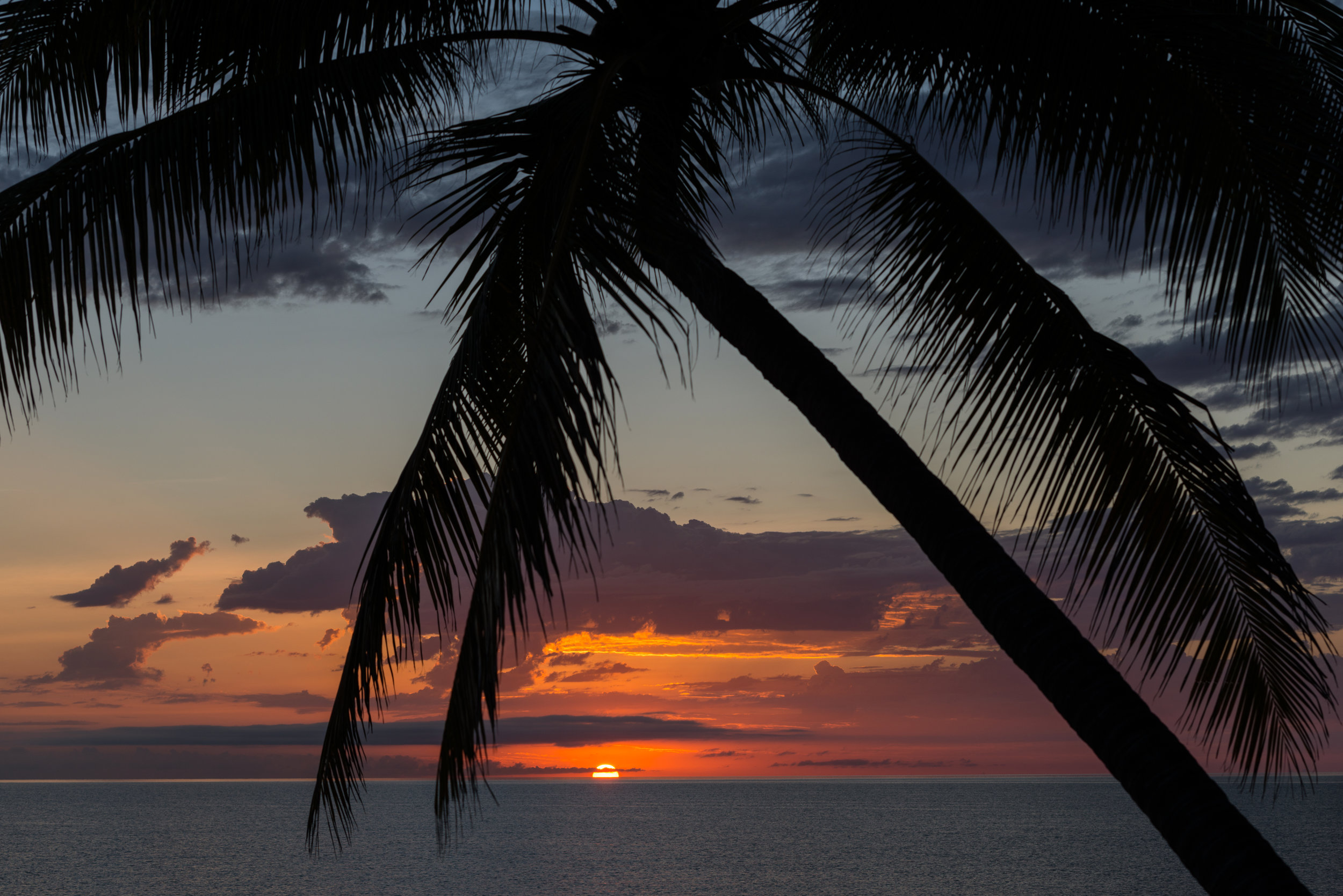 Thala_Beach_Nature_Reserve_2016__51.jpg