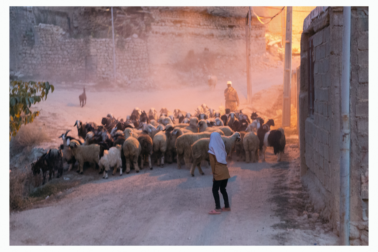 shepherd-with-flock.jpg