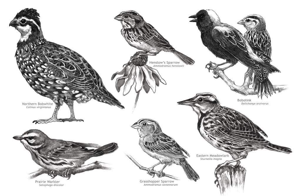 Grassland Bird Components