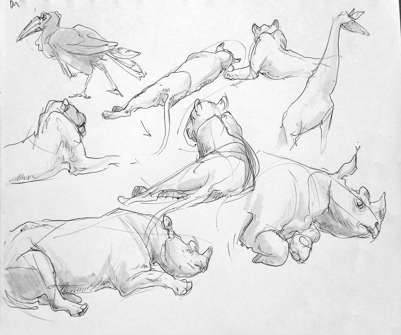 Kansas City Zoo Sketches