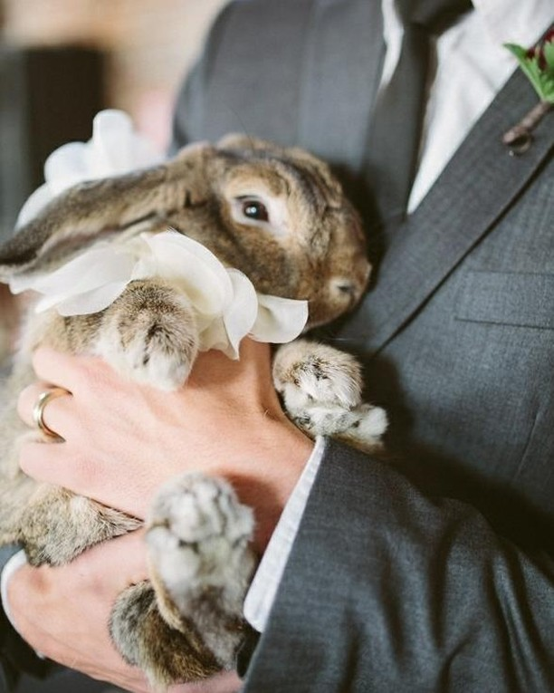 Cutest wedding attendant you ever did see did see 🐇⠀⠀⠀⠀⠀⠀⠀⠀⠀ ⠀⠀⠀⠀⠀⠀⠀⠀⠀ Photography: @allanzepeda⠀⠀⠀⠀⠀⠀⠀⠀⠀ ⠀⠀⠀⠀⠀⠀⠀⠀⠀ ⠀⠀⠀⠀⠀⠀⠀⠀⠀ ⠀⠀⠀⠀⠀⠀⠀⠀⠀ ⠀⠀⠀⠀⠀⠀⠀⠀⠀ ⠀⠀⠀⠀⠀⠀⠀⠀⠀ #hushedcommotion #hushedcommotionbride #putabeltonit #weddingplanning #imgettingmarried #engagedaf #wedspo #weddinginspo #weddingideas #weddingaccessories #bunny #bunnybunny #accessoriesdesign #accessoriesdesigner #weddinggoods #weddingstyle #weddinglook #weddingdesign #weddingjewelery #weddingjewels  #weddingaccessory #bridalstyle #bridetobe #brideandgroom #brideandbride #bridesmaids #brides #spinabride #bride2be #bridesofinstagram