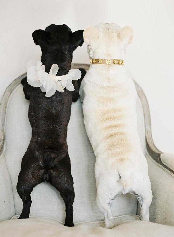 wedding dog collars hushed commotion.jpg
