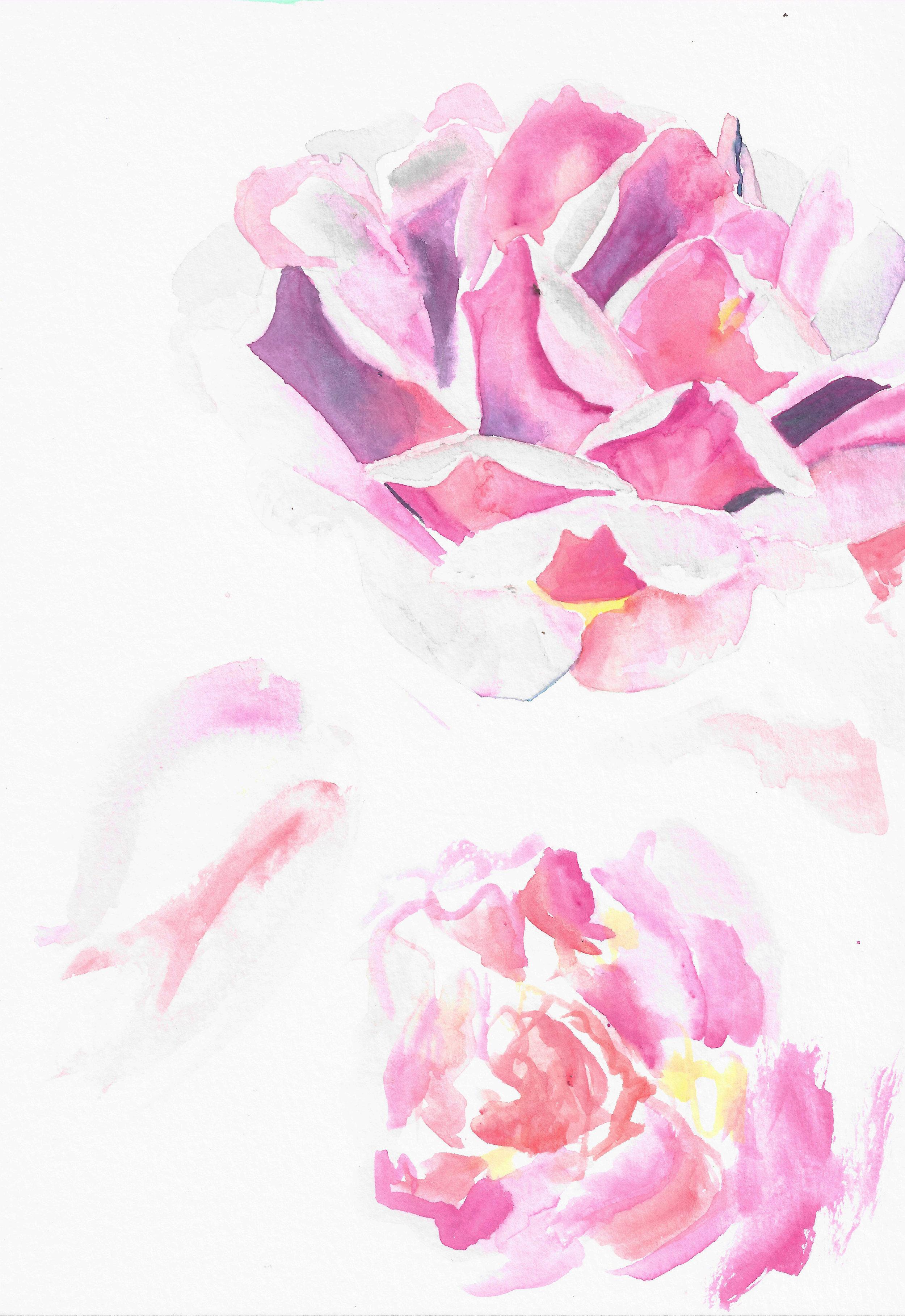 Alyssa Mannis Artist_Rose Study