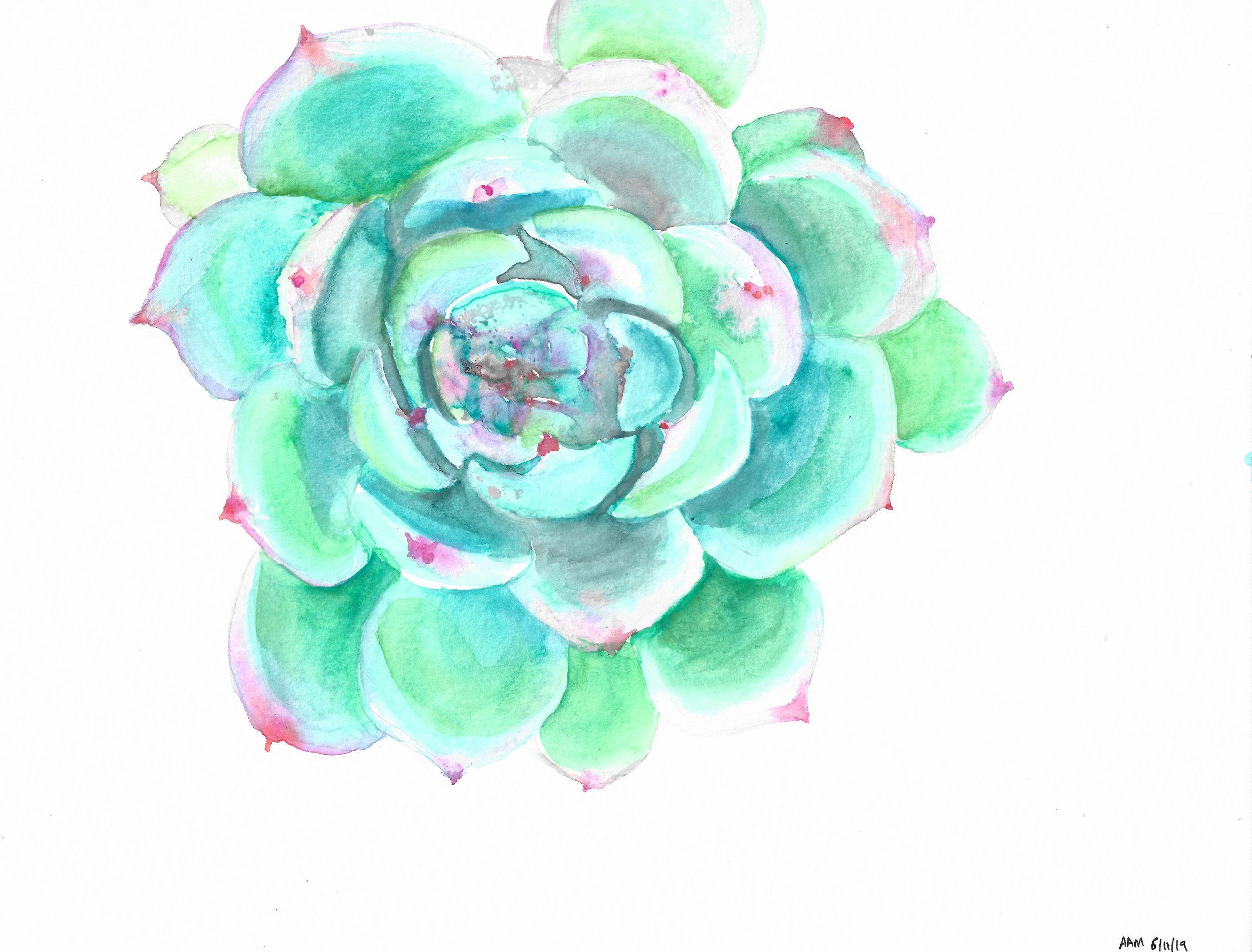 Alyssa Mannis Artist_Succulent Study