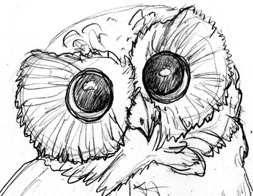Owl profile pic.jpg